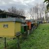apicoltura giacomazzi