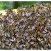 api-del-fiume