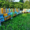 apicoltura-lucato