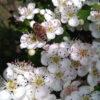 apicoltura-novello