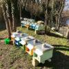 apicoltura-mulini-perduti