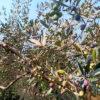 olivieri-ivana