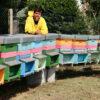 apicoltura-della-citta-murata
