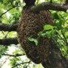 apicoltura-frison-ermenegildo